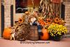 Autumn Display, Lafayette County, Wisconsin
