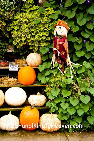 Scarecrow and Pumpkins, Gays Mills, Wisconsin