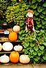 Scarecrow and Pumpkins, Gays Mills, Wisconsin