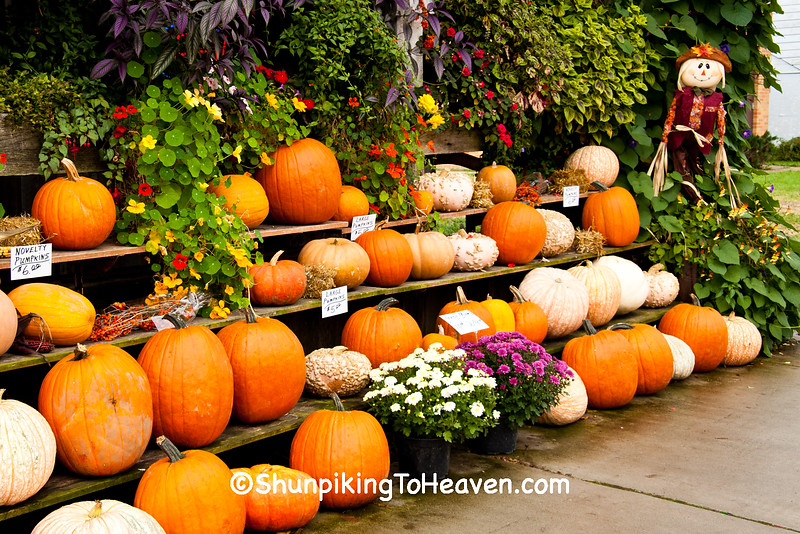 Pumpkin and Flower Display, Gays Mills, Wisconsin