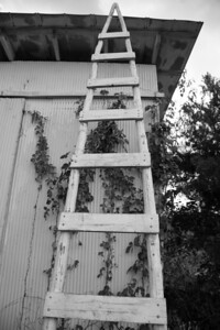 ladder bw