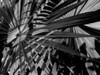 Palm Leaves as Abstract