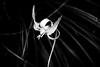 Portrait of a Glacier Lily