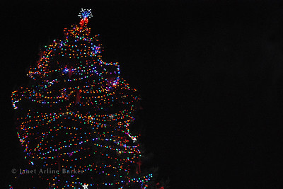DSC_2620-tree-lights-pp
