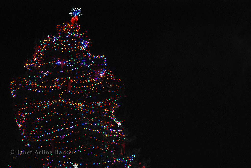 DSC_2620-tree-lights-pp