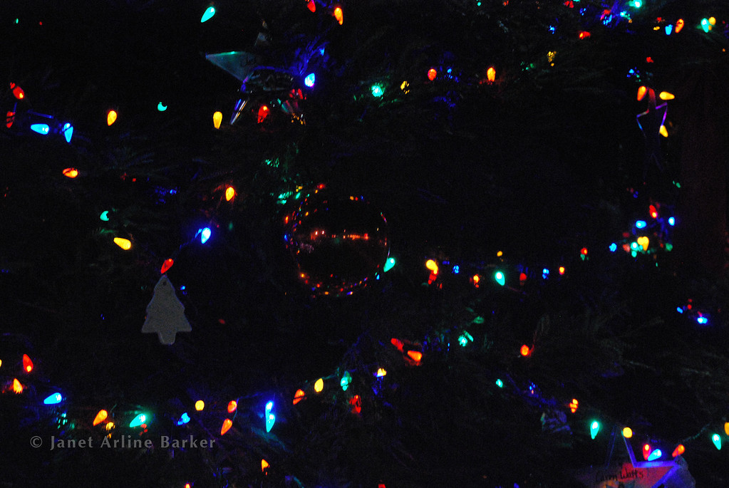 DSC_2642-tree lights-pp