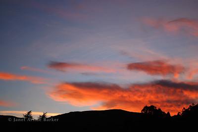 DSC_2297-sunset-pine-eucaltp-pp