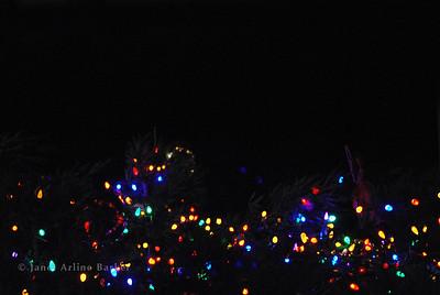 DSC_2652-tree lights-pp