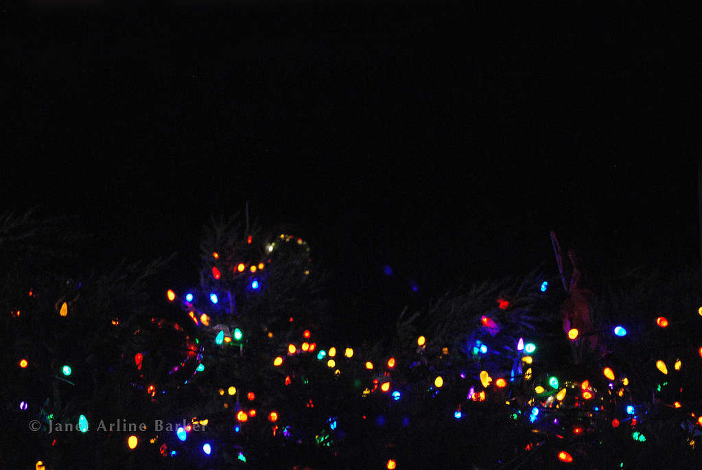 DSC_2652-tree lights-pp