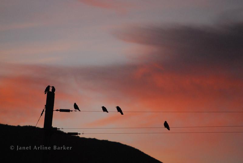 DSC_2299-birds on wires-black-pp