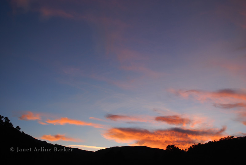 DSC_2294-sunset-eucalp-pp