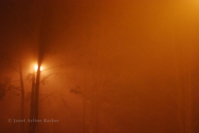 DSC_6126-night fog-pp