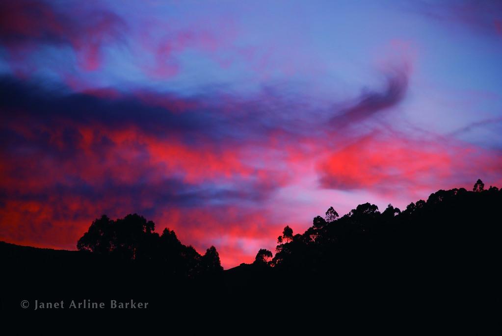 DSC_2307-sunset-eucalyp-pp