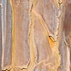 Rinde eines Köcherbaumes, Quiver tree, Aloe dichotoma, Blutkuppe, Namib Naukluft Park, Namibia