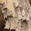 Rinde, Baum, National Botanical Garden Pretoria, Botanischer Garten, Pretoria, Südafrika, South Africa