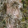 stachelige Baumrinde, Lankester Botanischer Garten, Carthago, Costa Rica