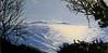 A View from Douglas Preserve (Santa Barbara)-SOLD