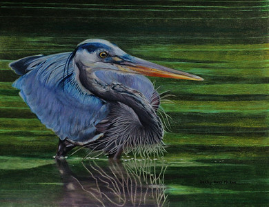 Great Blue Heron Fishing - Color Pencil - Barnwood Frame