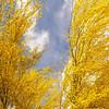Feather sky