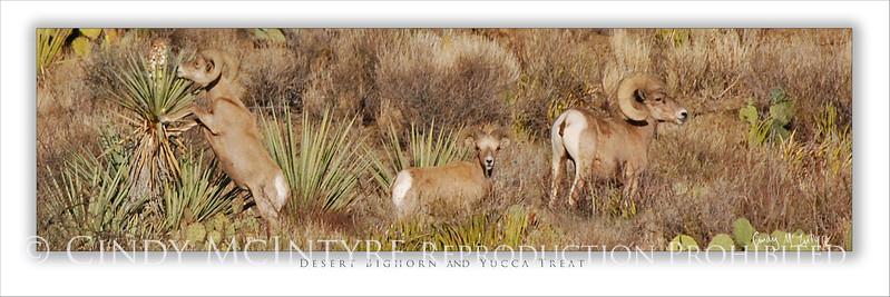 Desert Bighorn and Yucca Feast 4x12