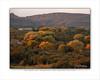 Autumn Cottonwoods RGV 8x10 copy