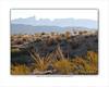Sierra del Carmen and Ocotillo morning 8x10 copy