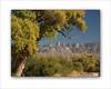 Sierra del Carmens and Fall Cottonwood 8x10