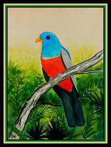 1-Black-tailed Trogon, Ecuador, 9x12, watercolor, sep 9, 2017.