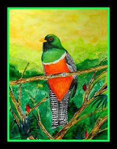 1a-Orange-bellied Trogon - Panama, watercolor, 11x15, march 24, 2016