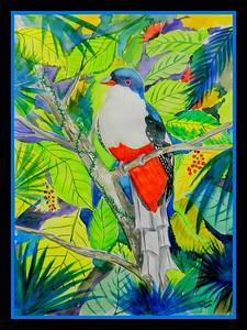 Cuban Trogon, 230x305mm, watercolor, march 23, 2016