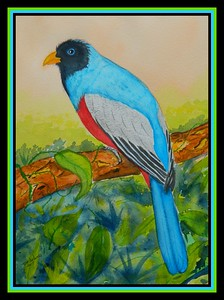 1-Blue-tailed-Trogon-male, Ecuador. 9x12, watercolor, dec 20, 2017.