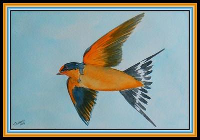 Barn Swallow, 5.75x9, watercolor, feb 19, 2018.