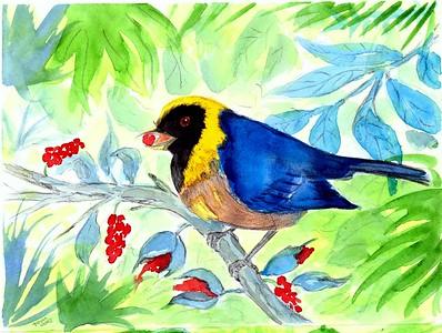 Golden-collared Tanager - Peru, 8.5x6, watercolor, nov 9, 2015.
