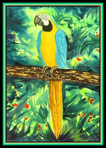 1-Blue and Gold Macaw, gift to Emma Byers, march 25, 2018., 11x15, watercolor, march 12, 2018