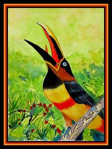 1-Chestnut-eared Aracari-Amazonia, 9x12, watercolor, sep 1, 2017.