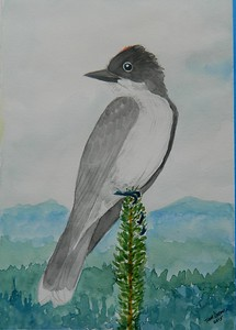 1-Eastern Kingbird, 6x8.5, watercolor, nov 19, 2015