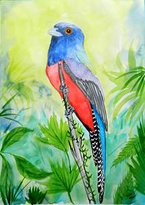 1-Blue-crowned Trogon, Brazil. 8.5x12. watercolor & mixed media, nov 13, 2015.