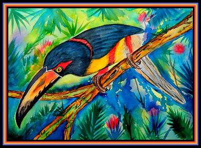 1-Collared Aracari, 10x14, watercolor, april 10, 2018