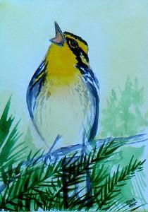 1-Blackburnian Warbler. 4x6, watercolor, nov 17, 2015.