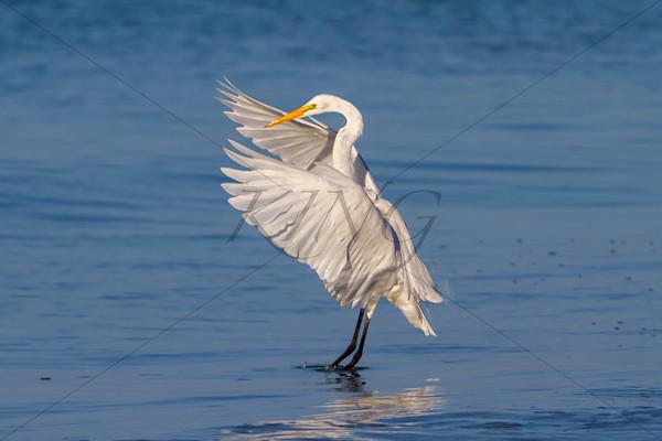 Blissful Wings