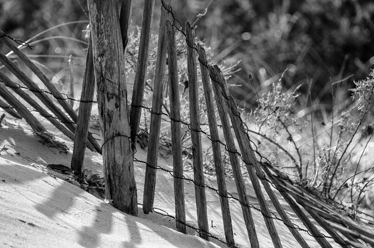 Cana Dunes