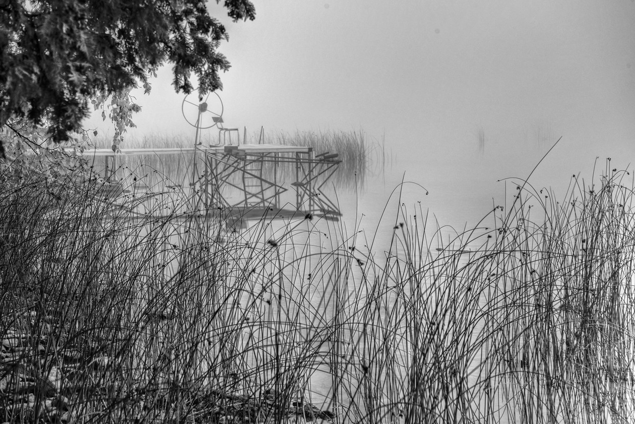 Water Grass And Fog