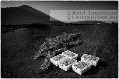 Bodega Stratvs - Lanzarote