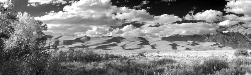 Autumn at the dunes in black and white