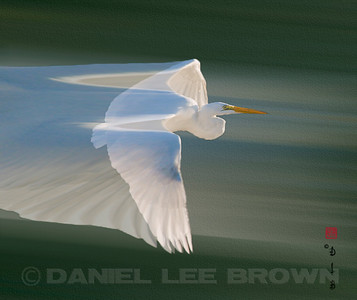 "Great Egret, 300dpi. Produced using photoshop. For purchase information and prices, click the ""BUY"" button."
