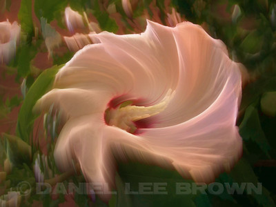 "Hibiscus #3. Produced using photoshop. For purchase information and prices, click the ""BUY"" button."