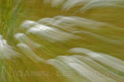 In-camera blur of Sierra wildflowers, Nevada Co. CA, 8-14-11.