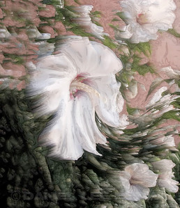 "Hibiscus #4. Produced using photoshop. For purchase information and prices, click the ""BUY"" button."