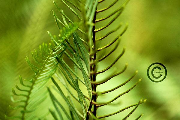 Botanical Garden Tofino