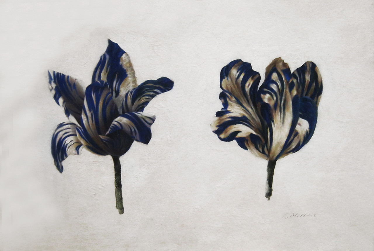 Two Blue Tulips